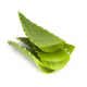 Foglia di Aloe Vera fresca da agricoltura naturale